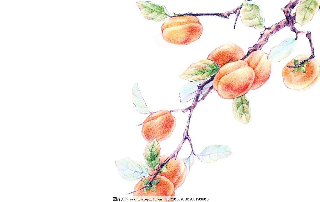 画桃子的步骤图