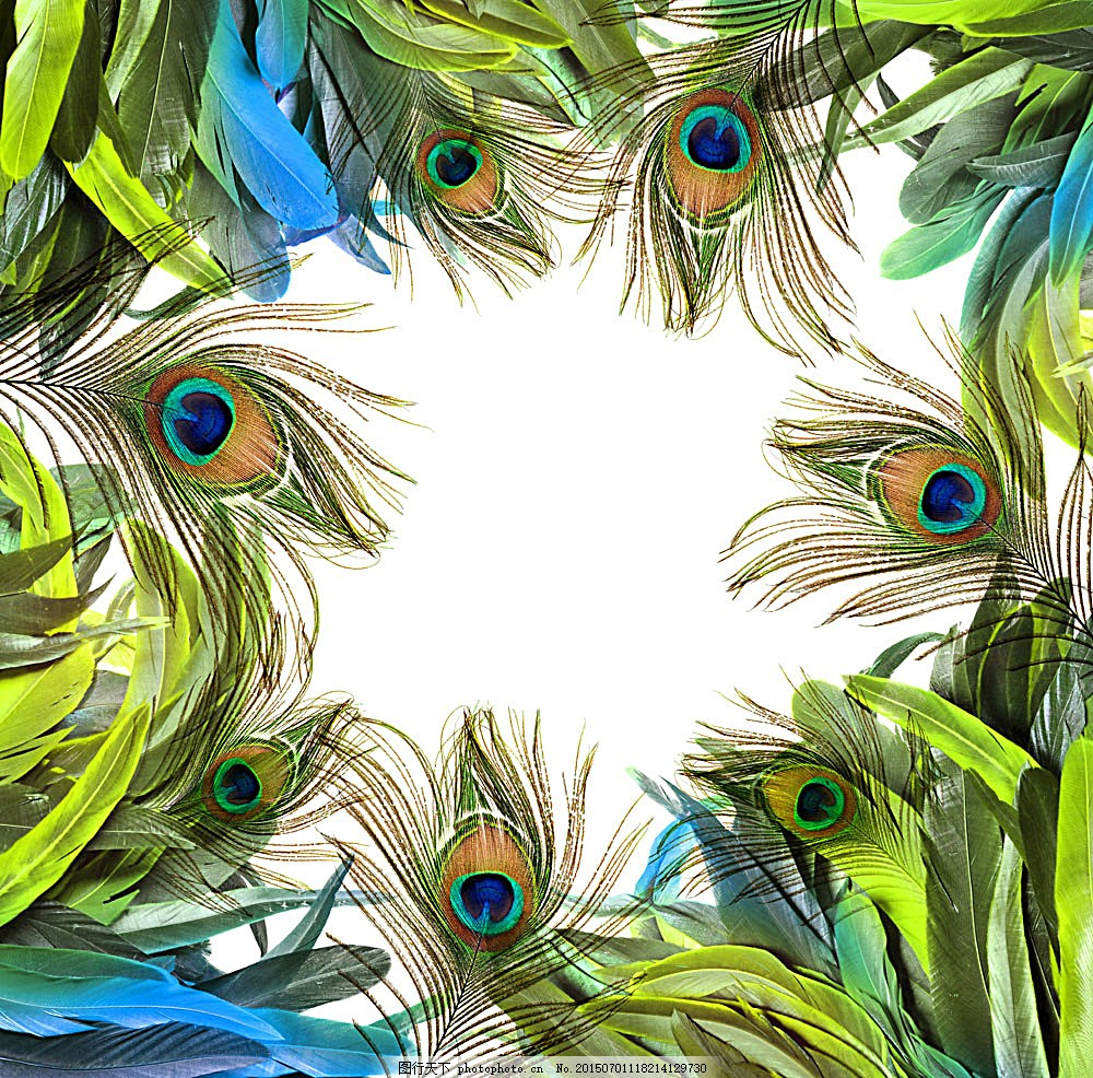孔雀羽毛背景 动物 孔雀 羽毛 背景图片 陆地动物 生物世界 图片素材