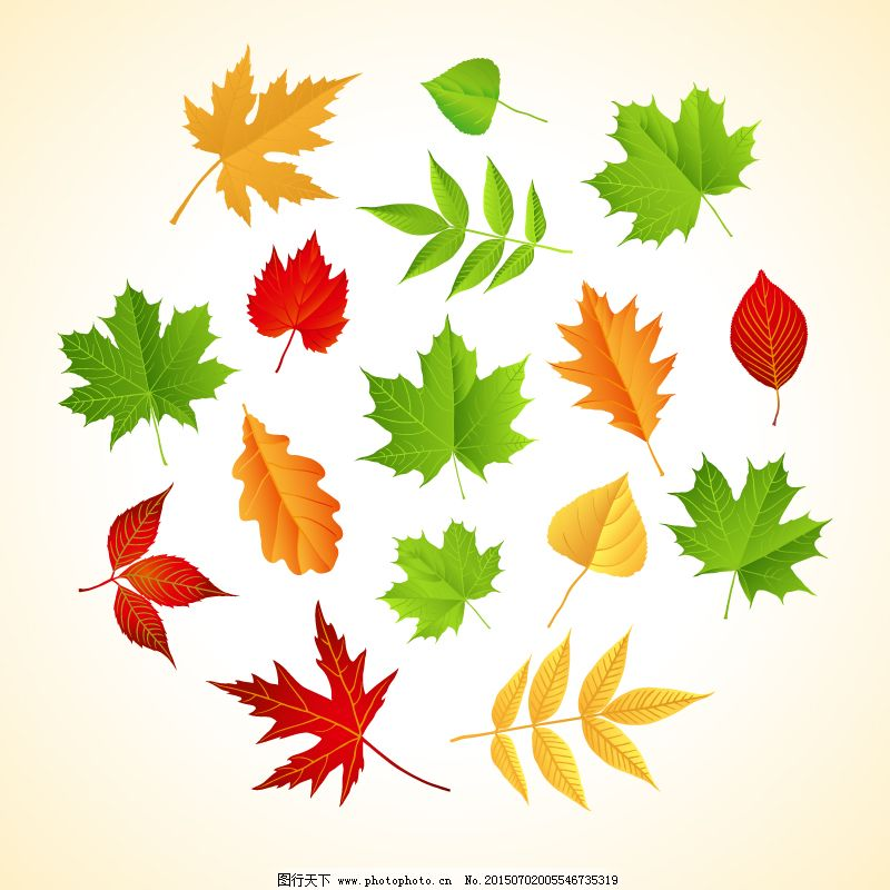 枫叶 矢量图 树叶 叶子 榆树叶 杨树叶 枫叶 叶子 树叶 矢量图 其他