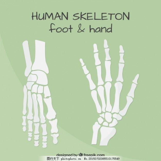 手 设计 平面 人 平面设计 脚 骨 人体 骨骼 身体部位 腕关节 关节 ai