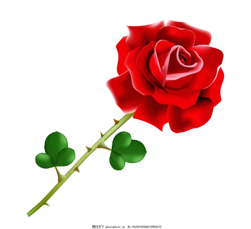 手绘单支带刺的红玫瑰 玫瑰花 红玫瑰 带刺的玫瑰 手绘画 贺卡