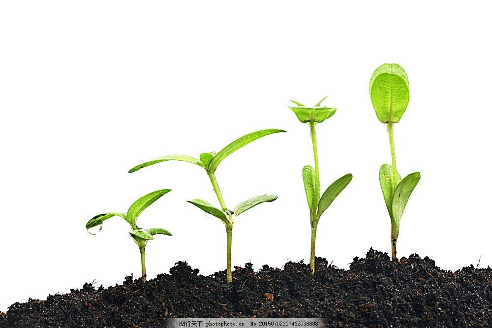 植物生长过程