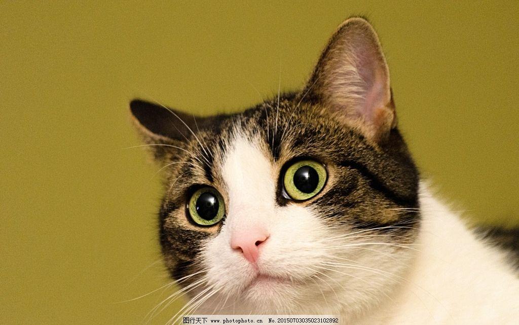 猫的素材 猫的海报