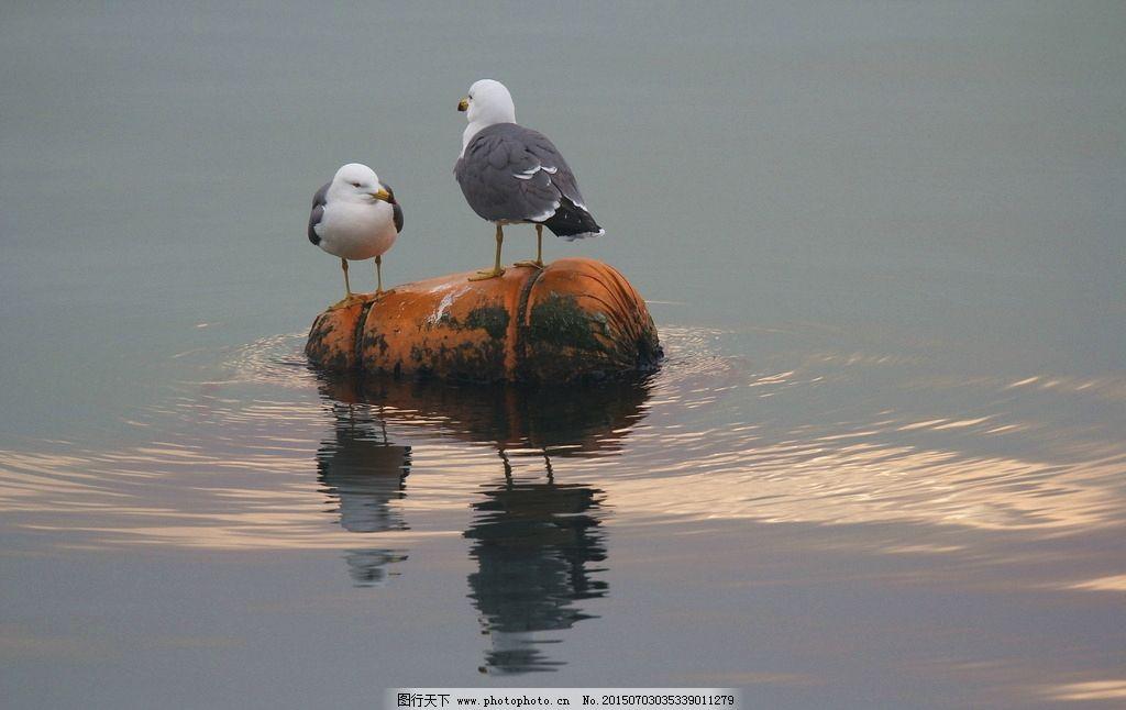 海鸥七巧板拼图图案大全动物