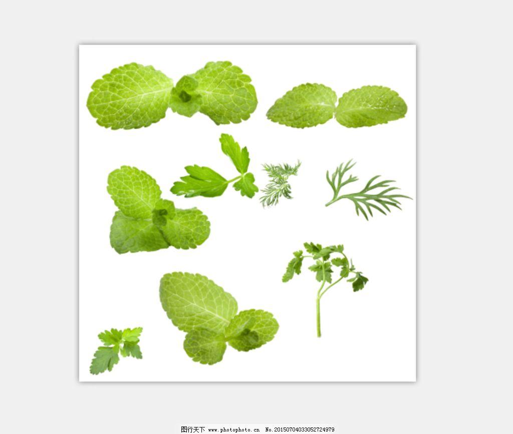 叶子 素材 树叶 菜叶 青菜 设计 psd分层素材 其他 300dpi psd