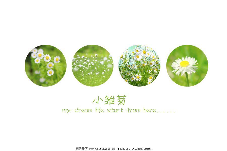 小雏菊ppt封面素材图片 清新排版图片