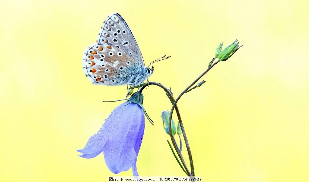 节肢动物门 昆虫纲 鳞翅目