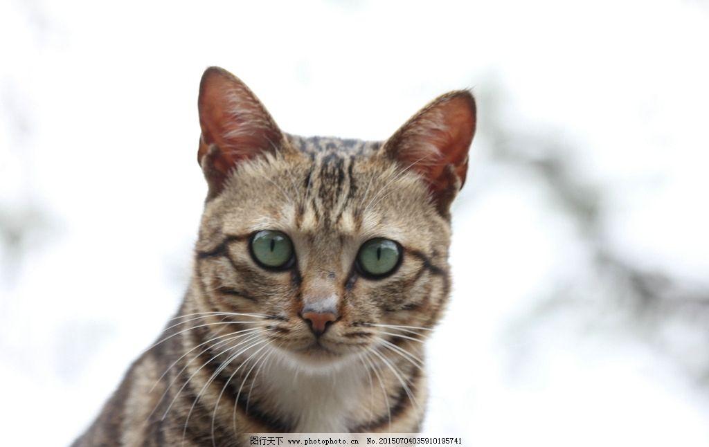 霸气猫咪大头像