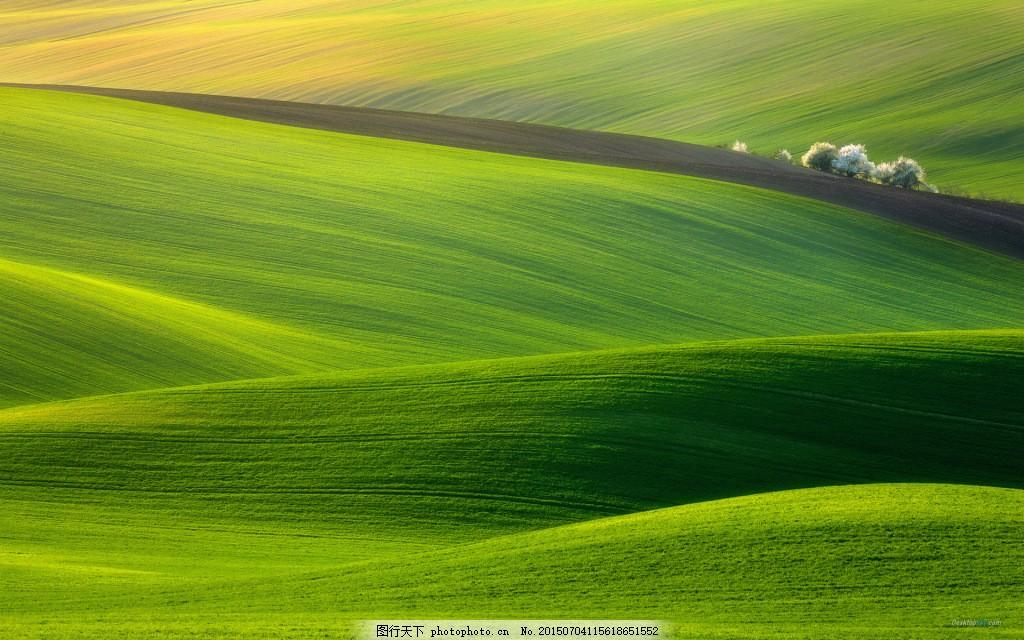 绿色草原电脑壁纸