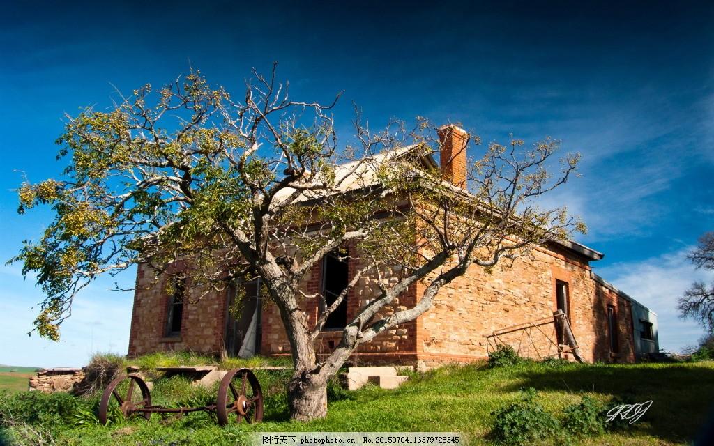 田园的房屋前面有棵大树