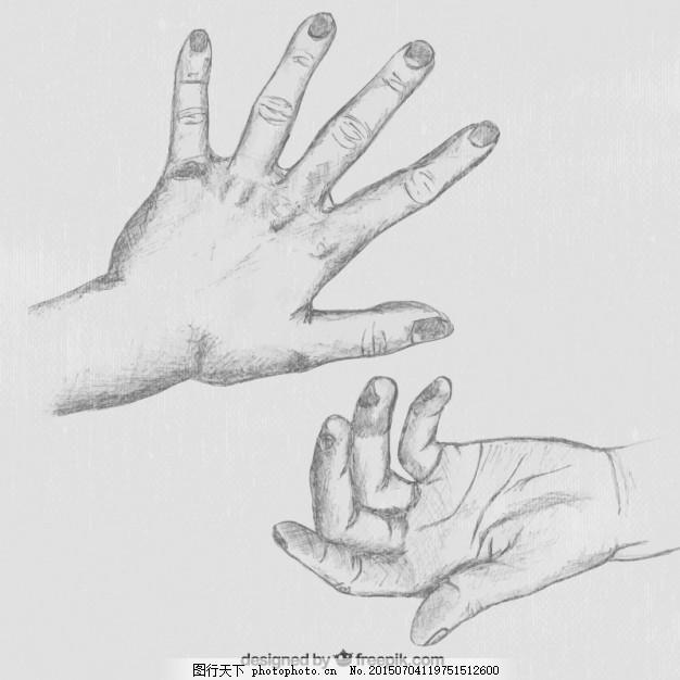手绘 人 手 铅笔 素描 绘画 手掌 指甲 人体 手画 拇指 解剖学 画