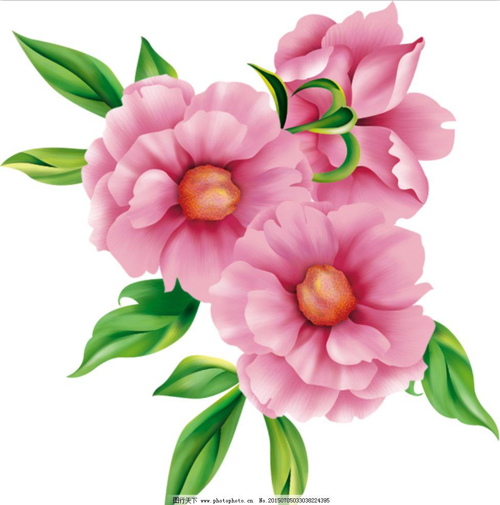 手绘花 粉色花 芙蓉花