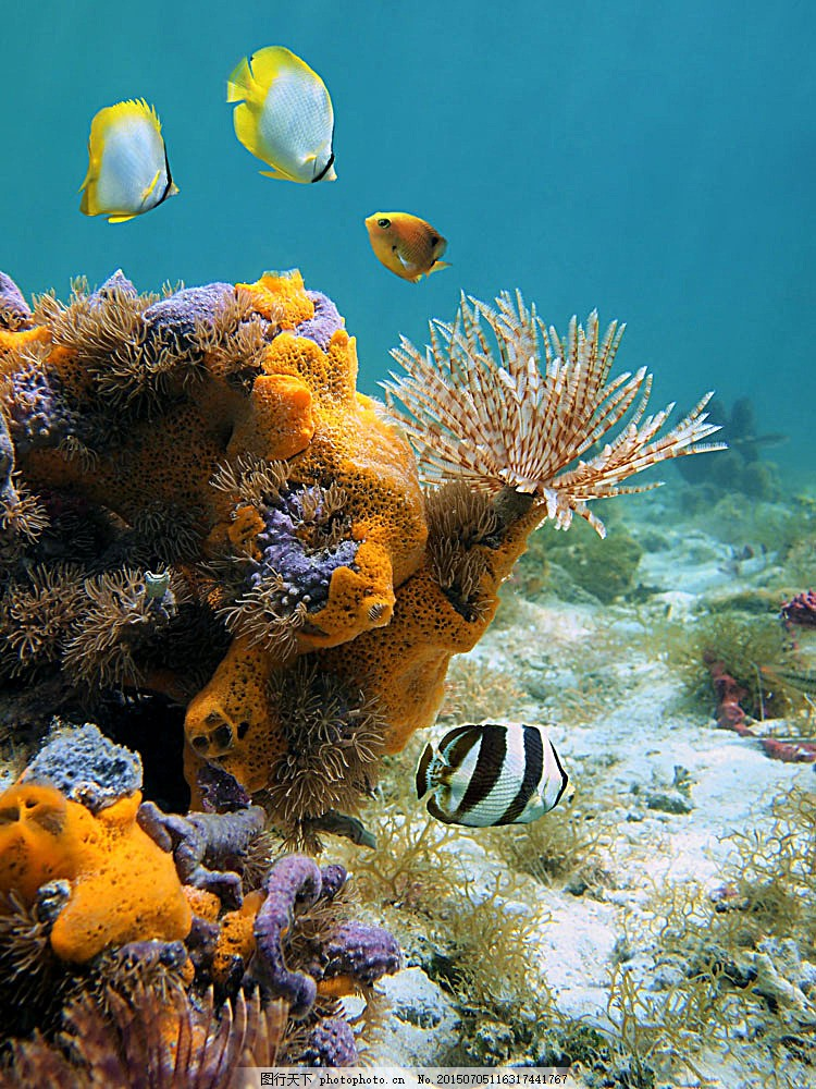 黑白条纹的鱼 海底鱼类动物 海底世界 海水 海洋生物 海鱼 海洋海边