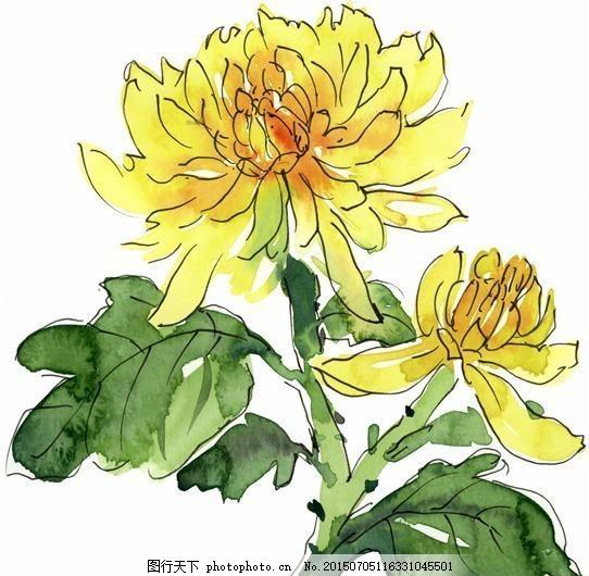 花卉图案 中国画 花草图案 静物画 书画美术 设计素材 静物画篇图片