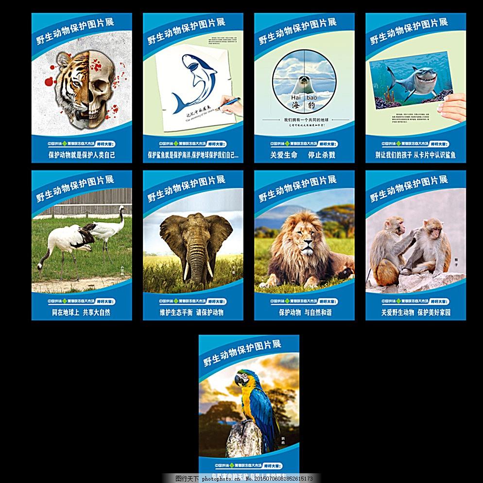 公益展板 保护动物 公益广告 野生动物 动物图片 公益标语 爱护动物