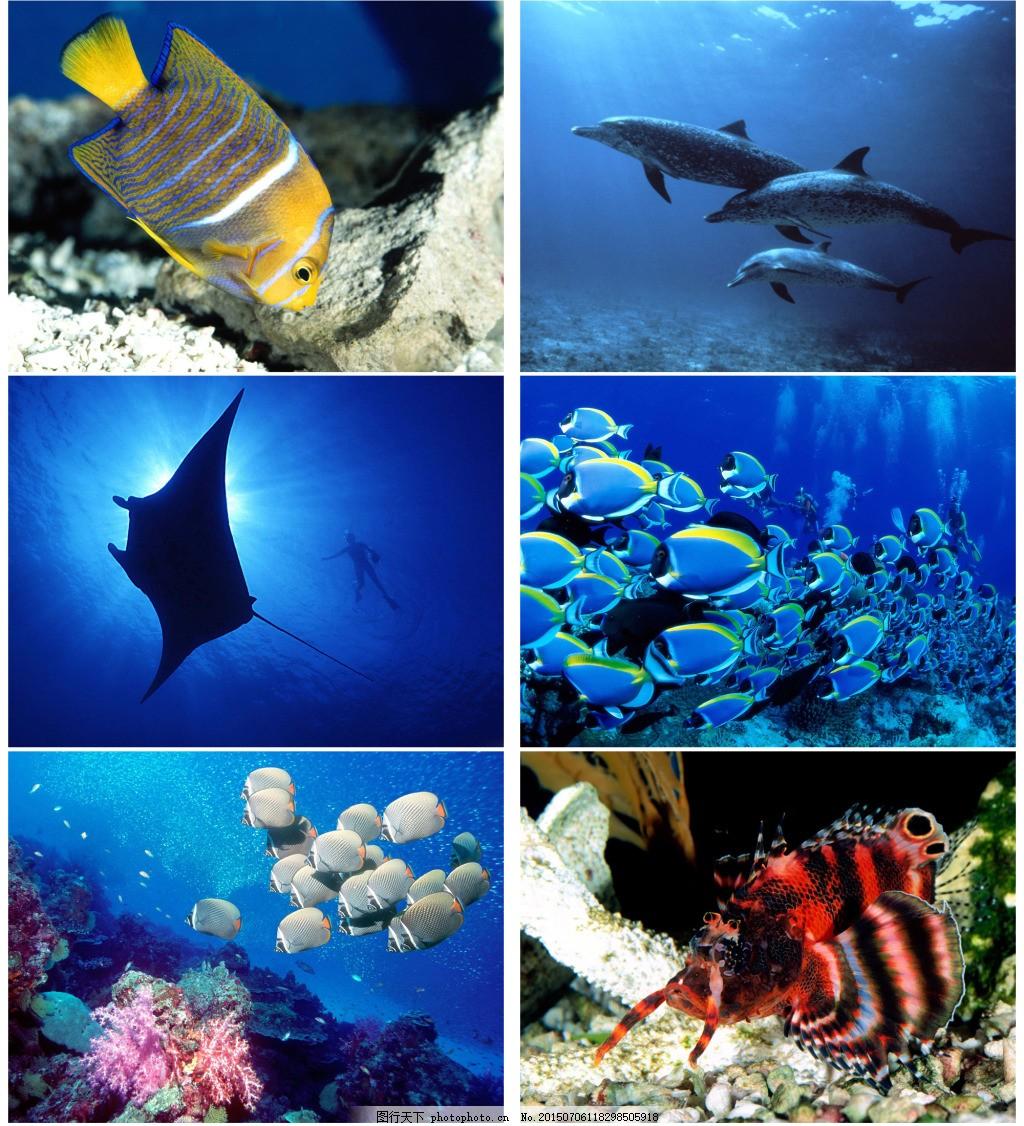 热带鱼背景 底图 海洋 蓝色图片