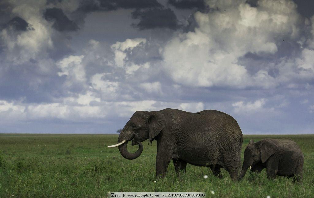 动物 蓝天 白云