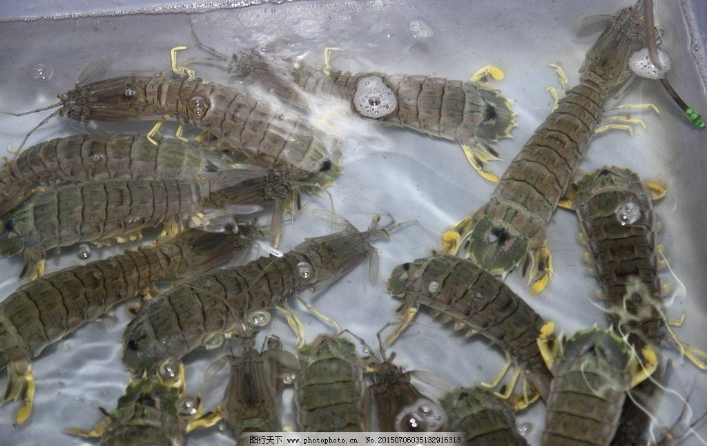 皮皮虾 海鲜 动物 海洋生物