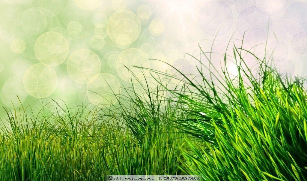 淡绿色 绿色壁纸 草 春天