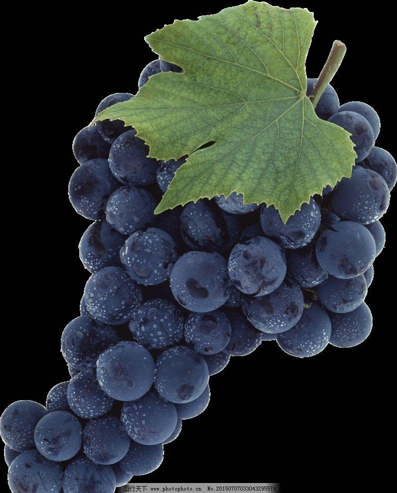 紫葡萄 png图片
