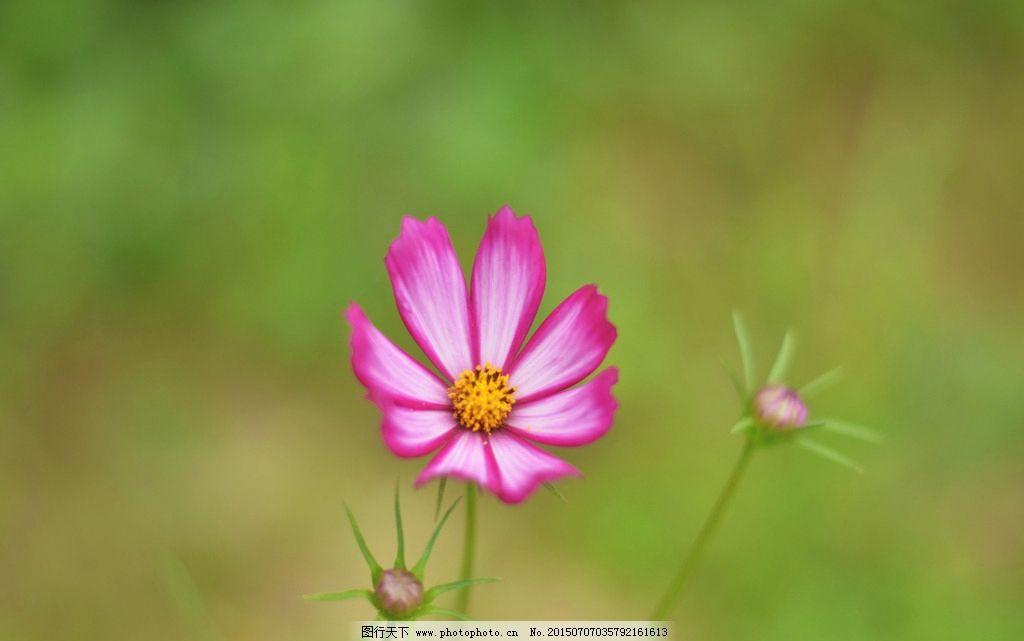 红色的花 小花