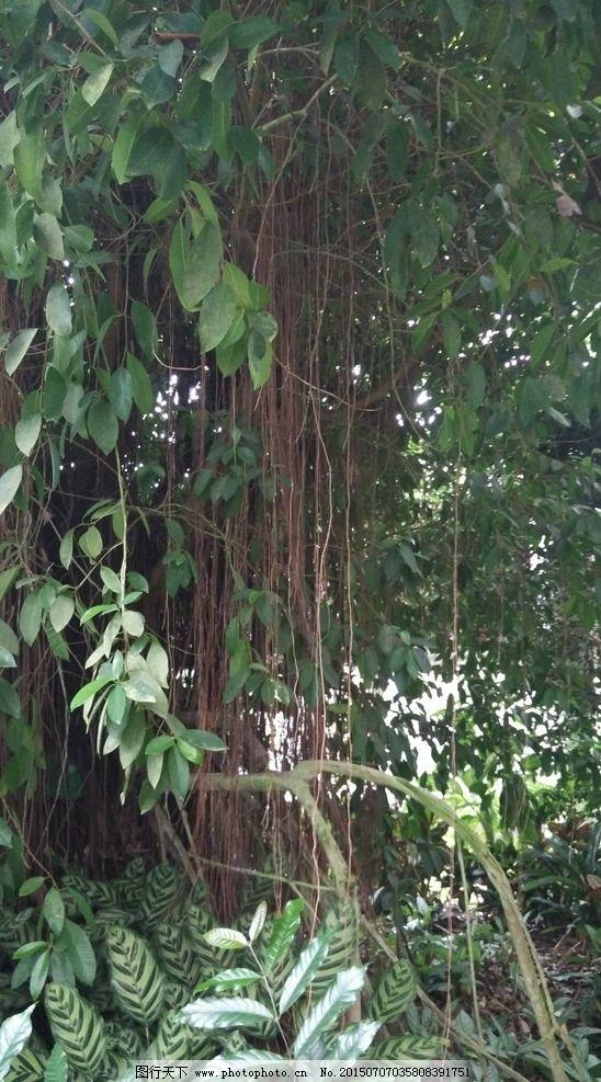 榕树 天宫庄园 园林建筑 绿植 园艺 摄影 生物世界 树木树叶 72dpi jp