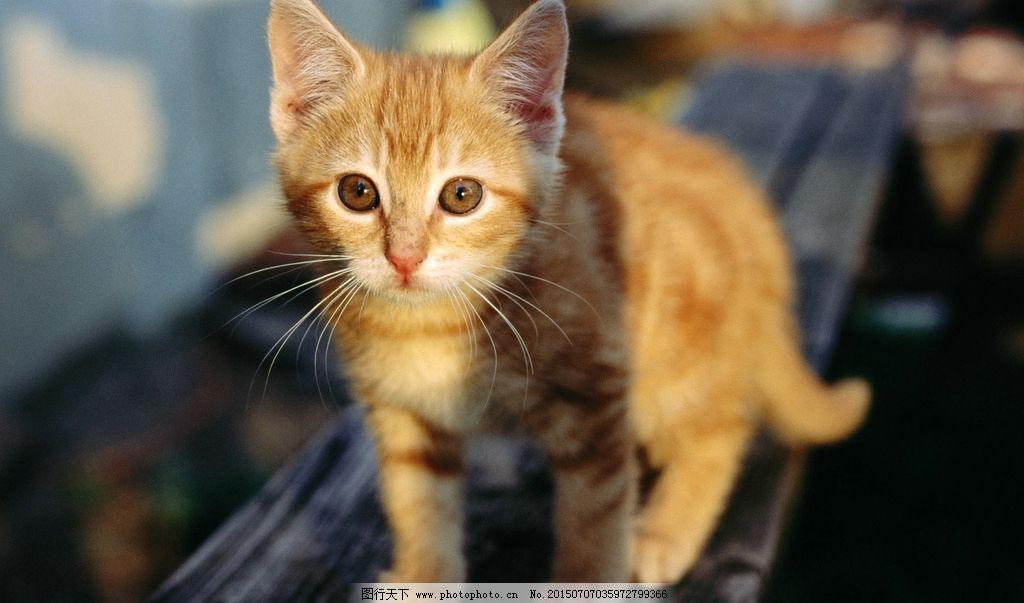 壁纸 动物 猫 猫咪 小猫 桌面 1024_603