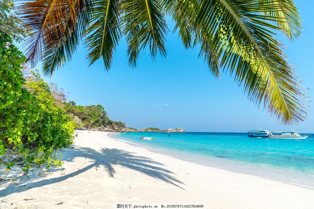 海滩椰子树高清素材