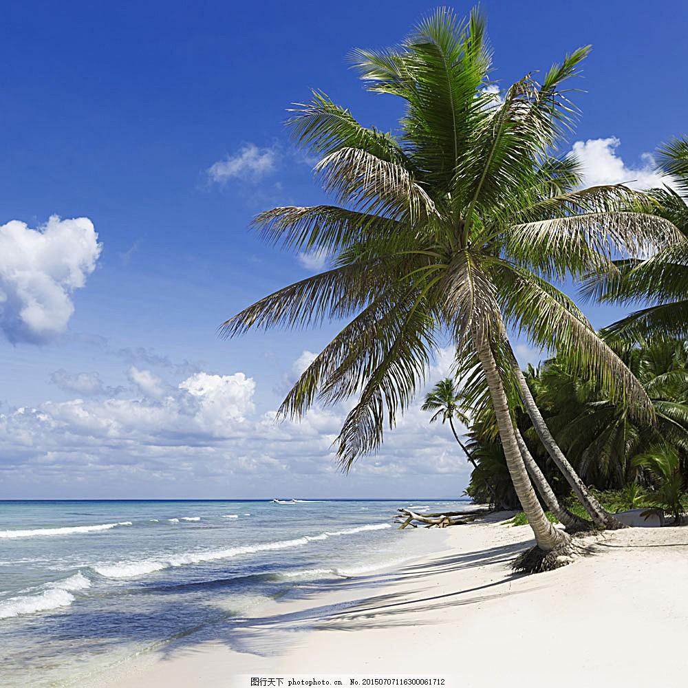 美丽椰树沙滩景色 热带风景 沙滩风景 海滩风景 大海风景 美丽海景