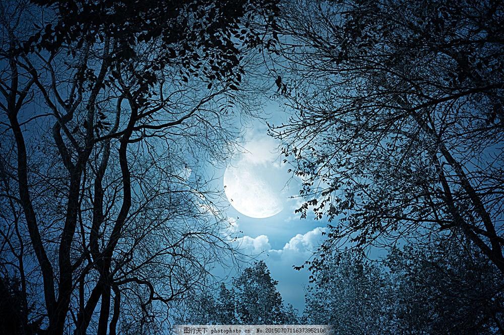 恐怖的夜晚 森林 夜晚 圆月 万圣节背景 万圣节 夜景 梦幻 月亮 天空