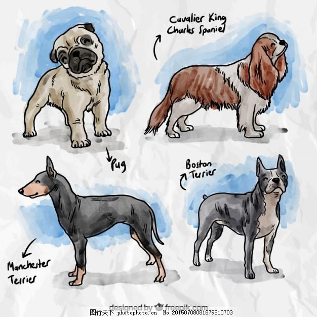 手画狗品种 水彩画 一方面 动物 油漆 狮子 梗品种 猎犬品种