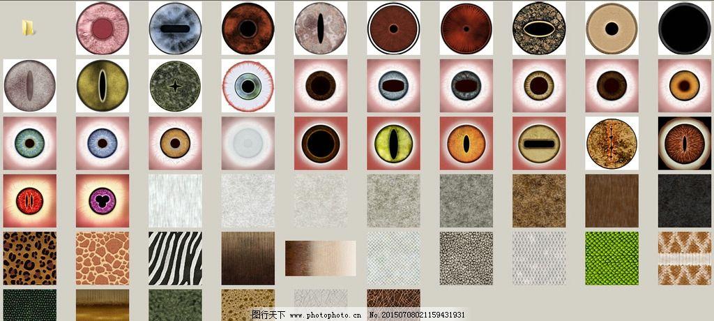 动物眼睛毛皮图片