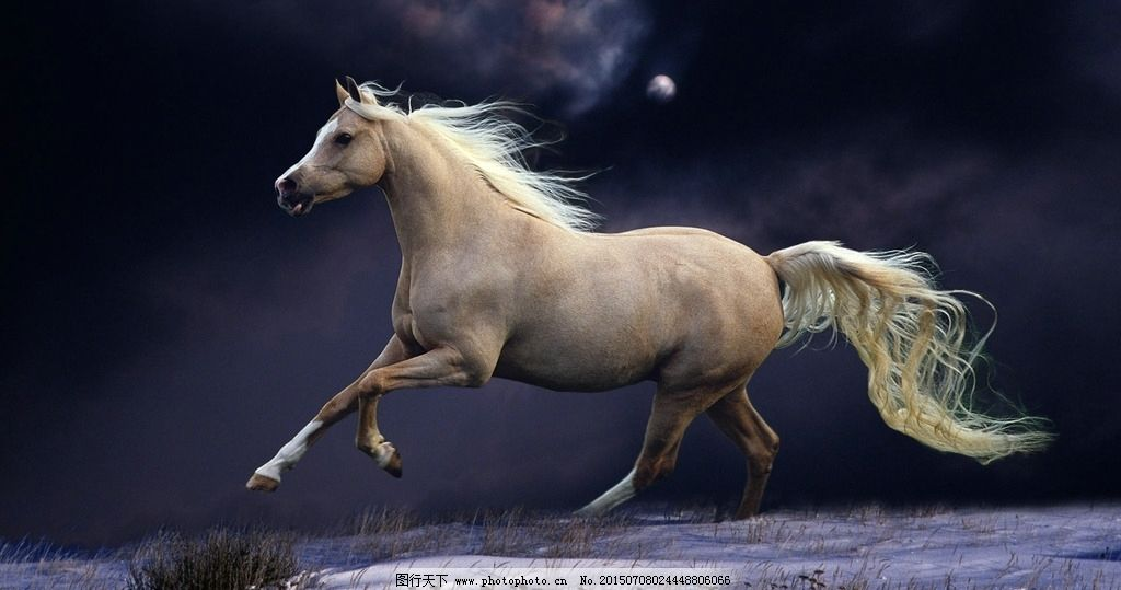 奔跑的骏马图片_野生动物