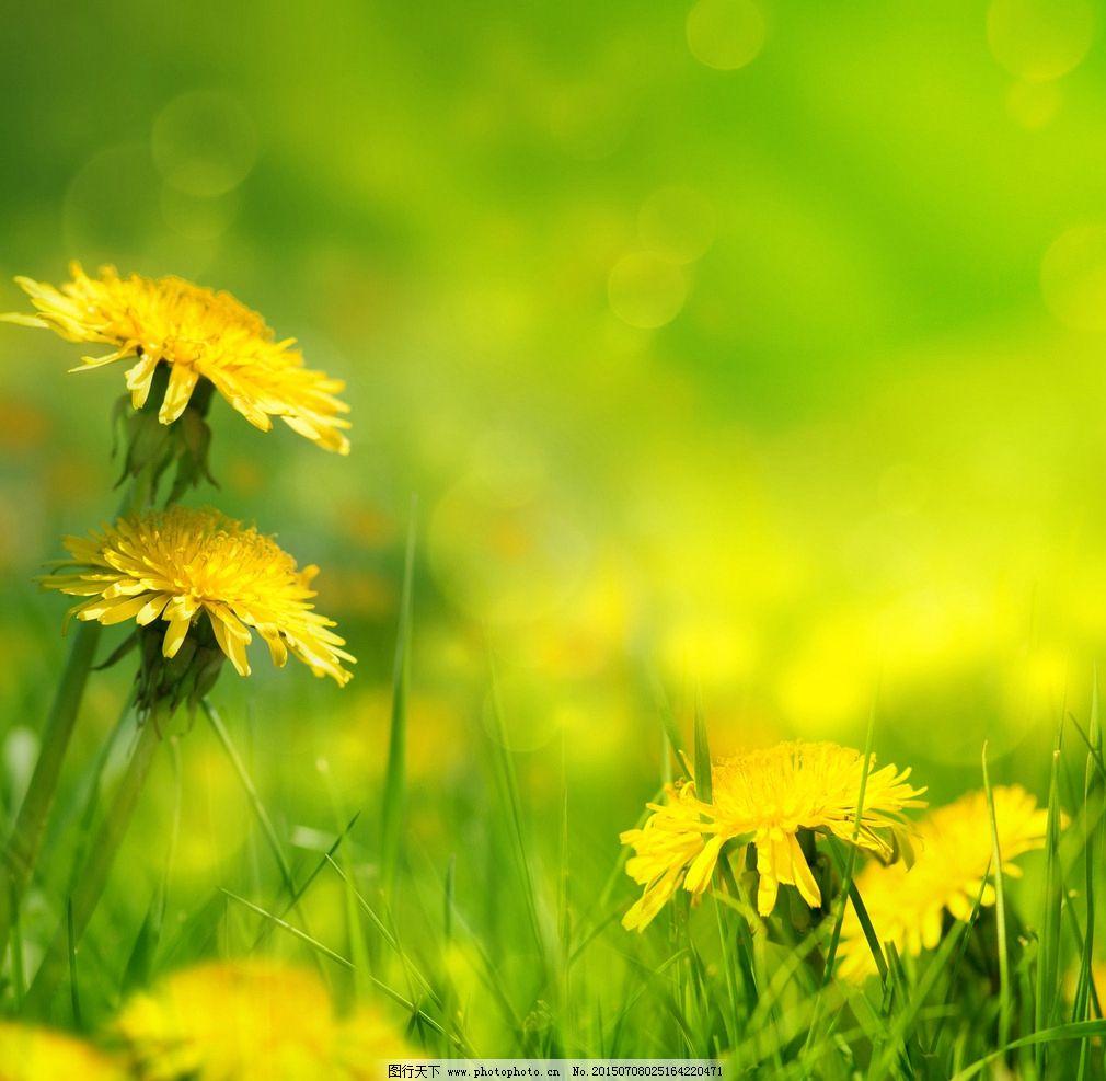 自然风景 小黄花 绿草 草地 清新