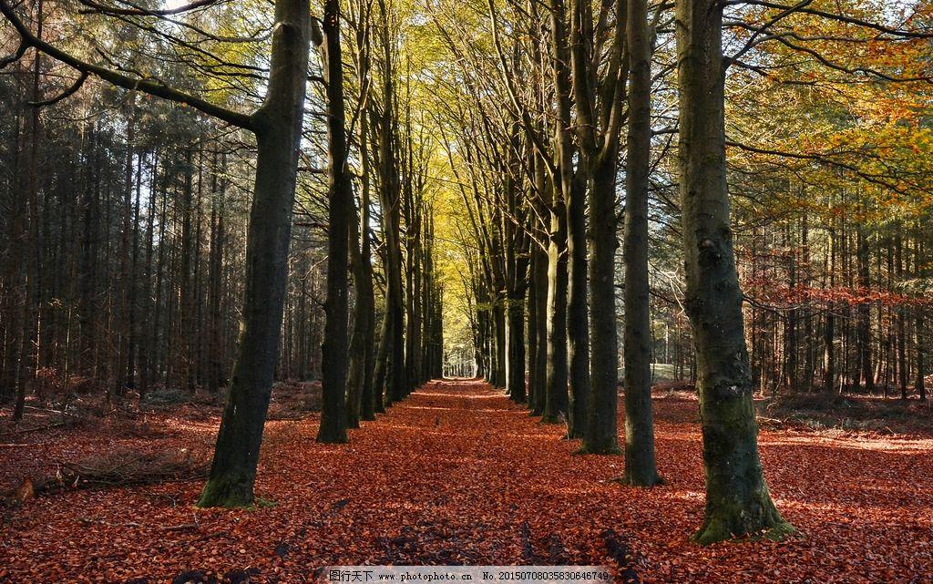 树林 落叶图片
