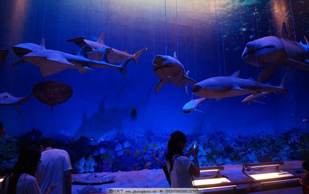 广州博物馆 鲸鱼 海底世界图片