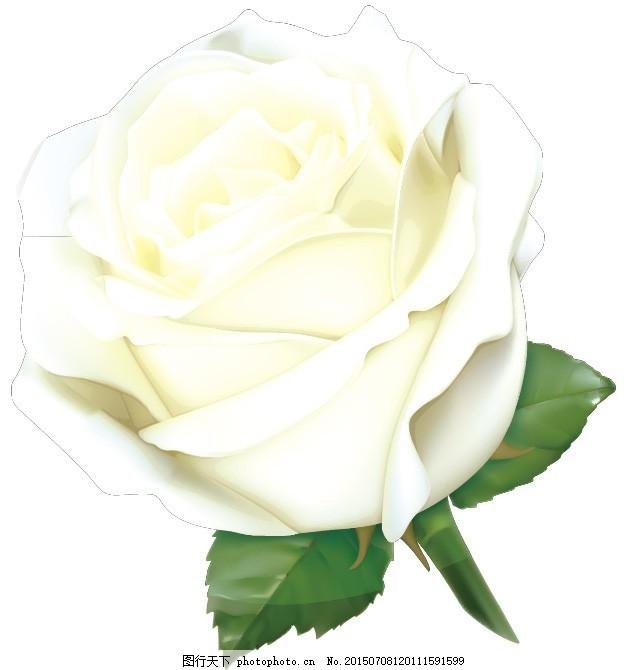玫瑰花元素 玫瑰花 白色 情人节 叶子 矢量 创意玫瑰花 eps eps