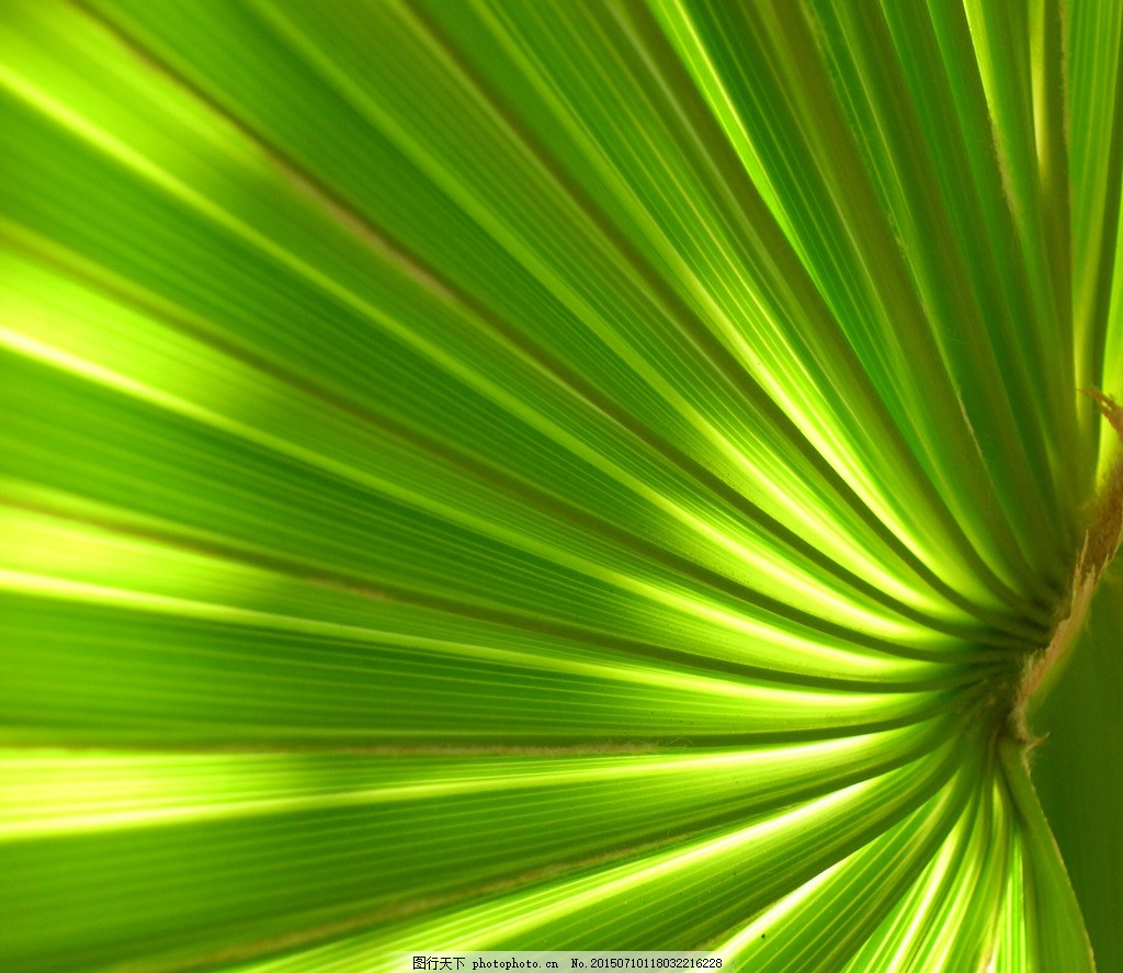 夏季椰子树高清 叶子 树叶 绿色