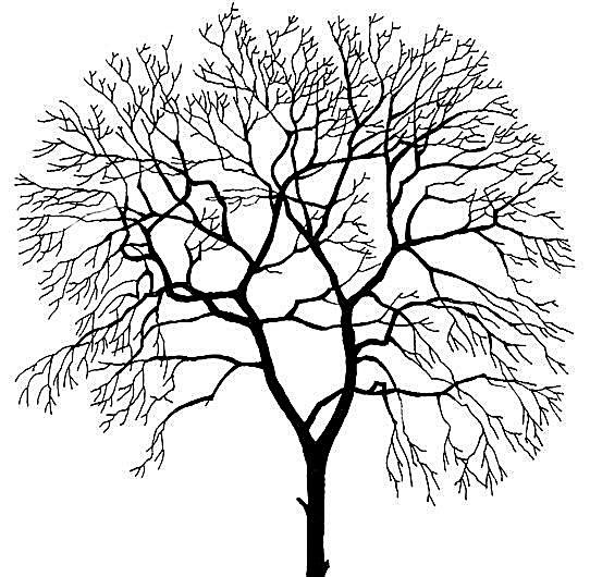 树 贴图素材 分层psd 089 树 植物 室外贴图 贴图素材 建筑装饰 分层