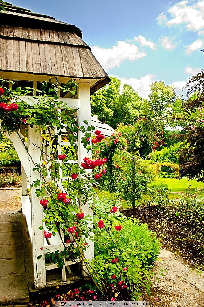 庭院鲜花 庭院风景 院子 美丽风景 风景摄影 花园 花朵 园林景观