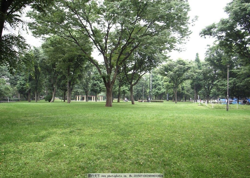 草地 树木 公园 植物 植被 风景 摄影照片 图片素材 天空 灯