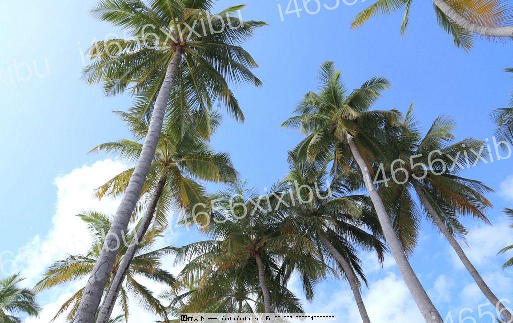 海岛椰树树叶贴画