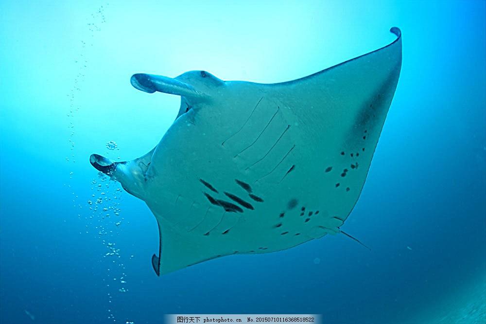 海底动物名称和图片