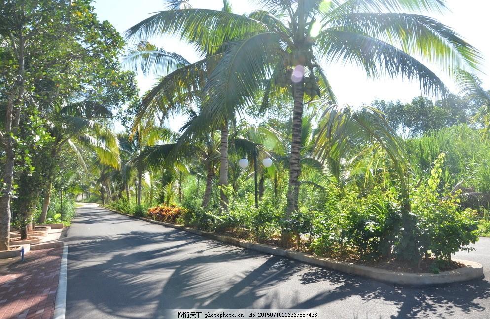 海南风光 椰子树 景观大道 草坪 花圃 摄影 自然景观 其他 300dpi jpg