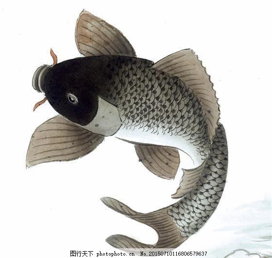 鱼 写意水族 国画 _0251 设计素材 动物画篇 中国画篇 书画美术