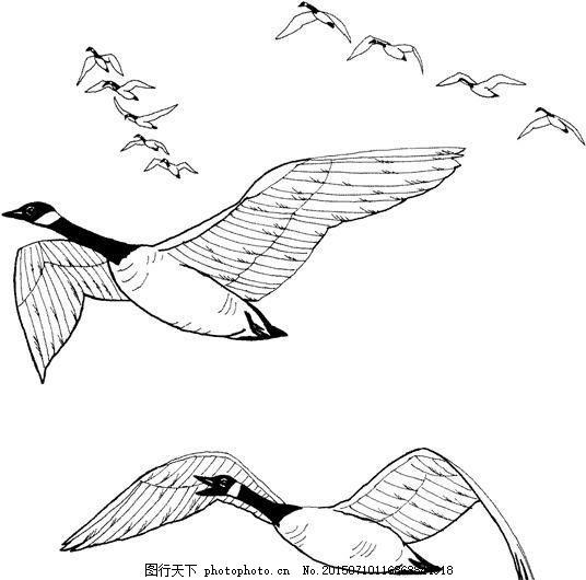 鸟类素描 动物素描 动物手绘画 设计素材 动物专辑 素描速写 书画美术