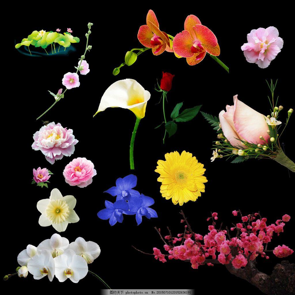 花,玫瑰 茉莉 花朵 手绘画 荷花 牡丹 月季花 桃花-图