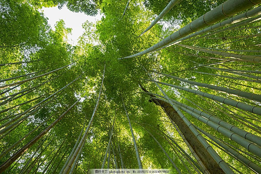竹林仰视风景 绿竹 竹林风景 竹子 美丽竹林景色 美丽风景 自然美景