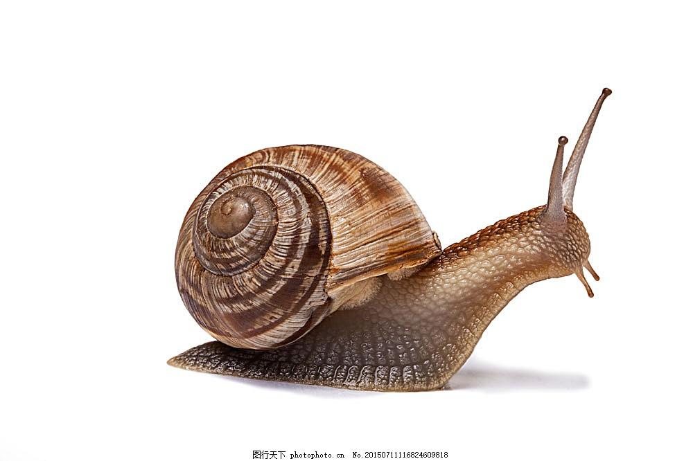 蜗牛摄影 陆地动物 爬行动物 小动物 动物世界 生物世界 图片素材