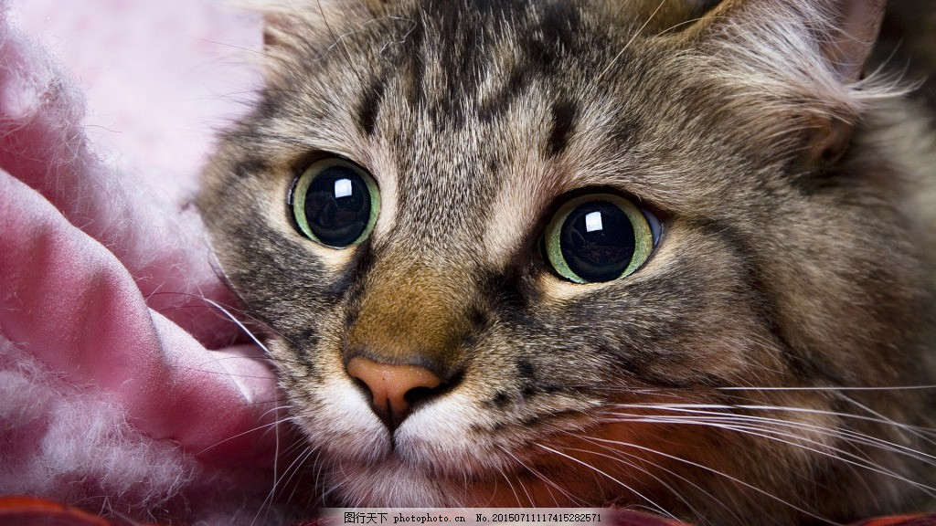 猫的渴望 可爱的猫 小猫 猫咪 bmp 黑色